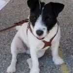 DSCF1862-150x150 cute dog